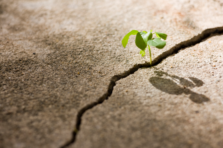 Video: From Resilience to Prosilience